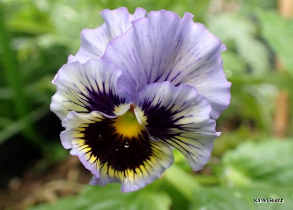Flirty Skirts Pansy Lavender