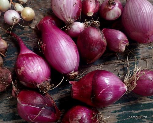 Cipolla di Tropea Onion
